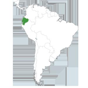 ong remar en ecuador