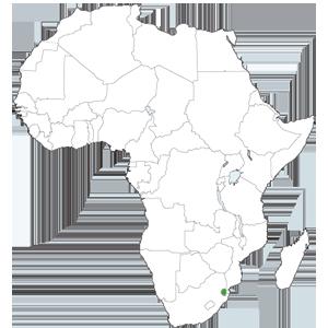 Ong remar en Swazilandia